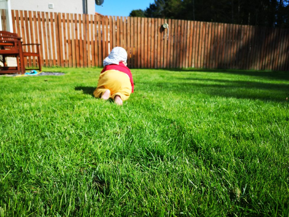 Baby in sun hat crawling on lawn
