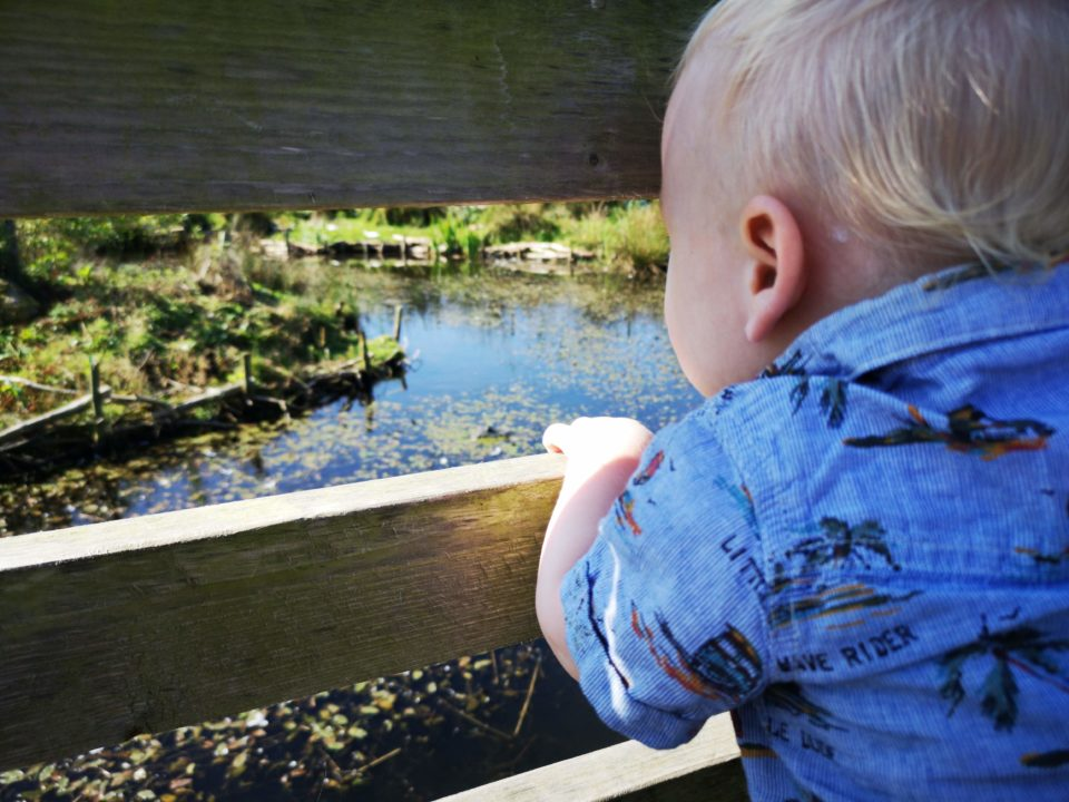 Toddler looking at duck pond