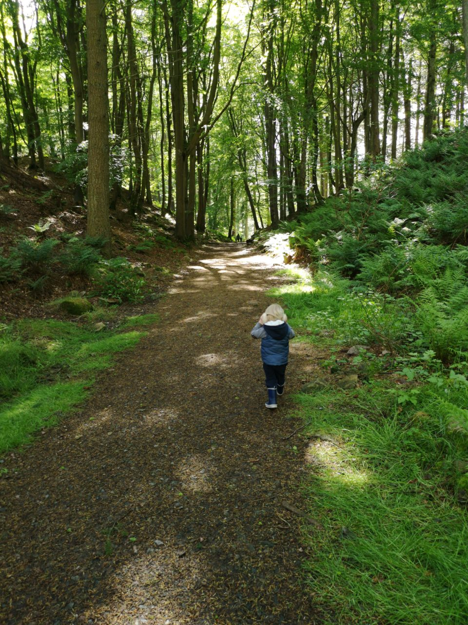 Exploring as a family of 4. Toddler walking in the woods